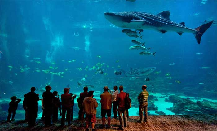 Largest Aquarium In The U.s.
